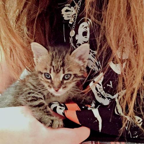 Кошка Сара.